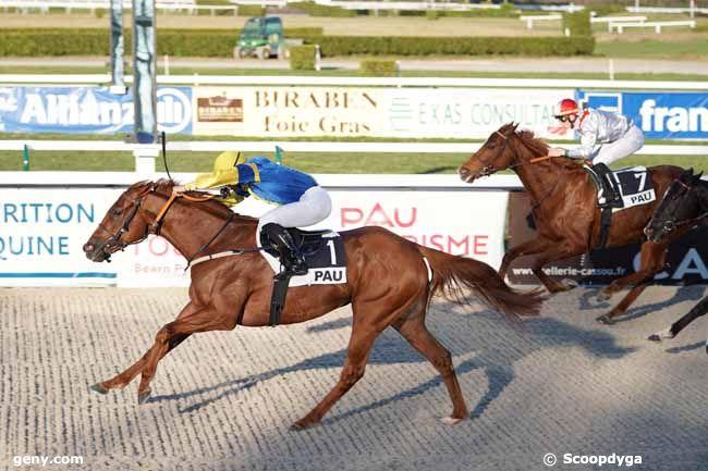 14/01/2020 - Pau - Prix Cluster So Horse Alliances : Arrivée
